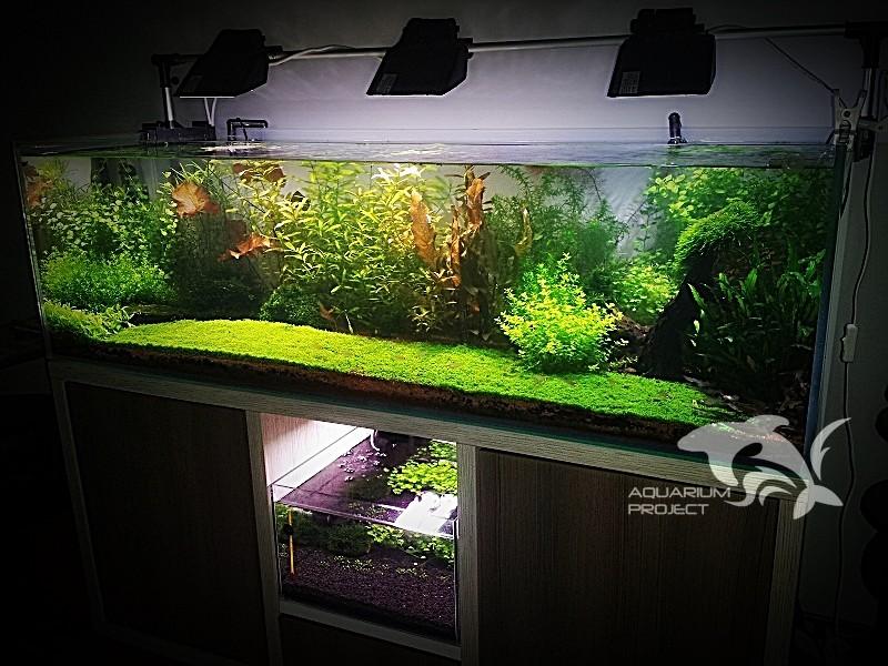 Akwarium Holenderskie 450l Aquarium Project