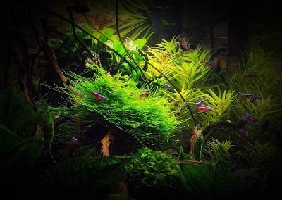 Tropikalny Las
