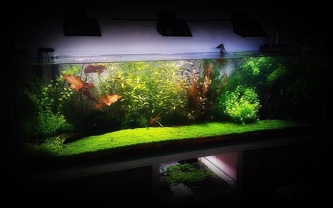 Akwarium Holenderskie 450L
