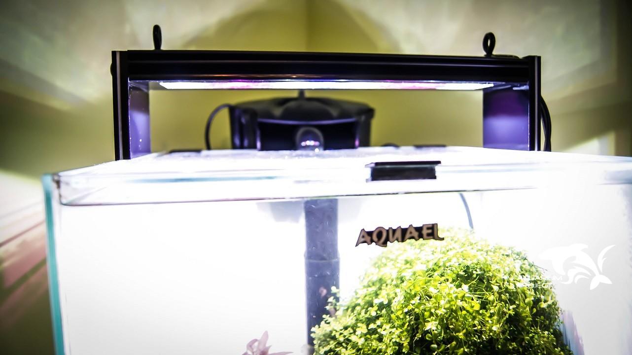 Lampa LED AP